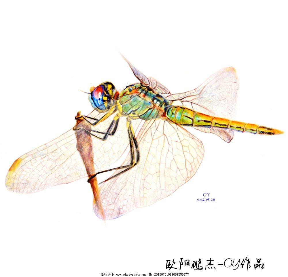 圆珠笔绘画蜻蜓图片