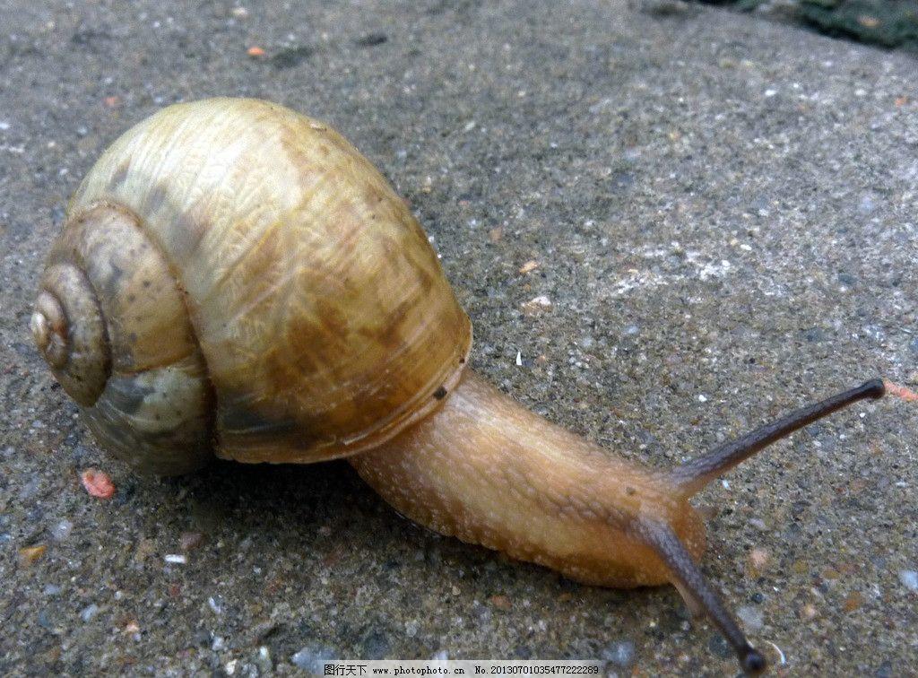 蜗牛 动物 水泥 昆虫 摄影作品 生物世界