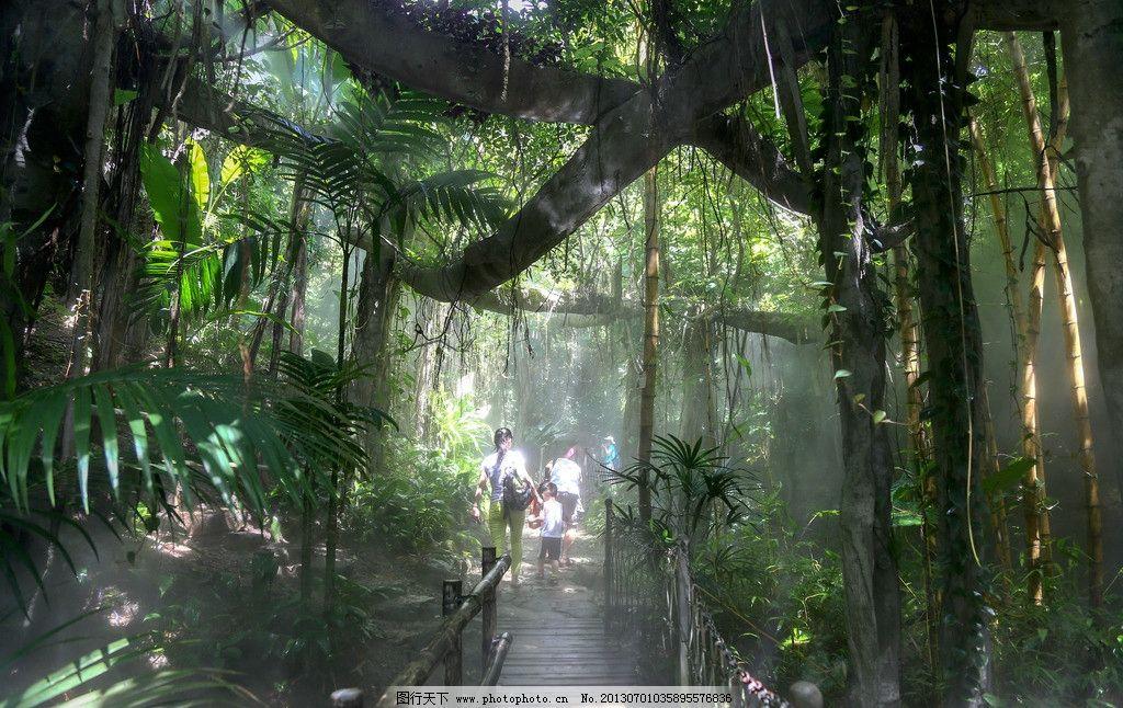 热带雨林 旅游 摄影 风景 自然 树木树叶 生物世界 240dpi jpg