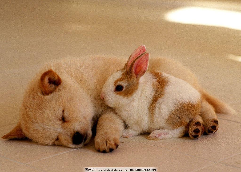 小狗兔子 温馨 唯美 动物 摄影