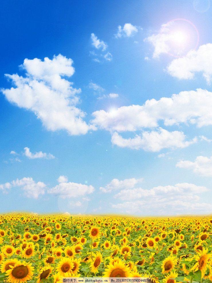向日葵 微笑 白云 向上 快乐 阳光 设计 背景素材 psd分层素材 源文件