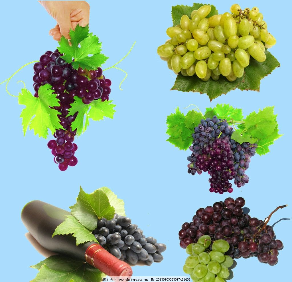 葡萄 葡萄素材 夏季水果 水果素材 紫葡萄 水晶葡萄 手拿葡萄 红酒