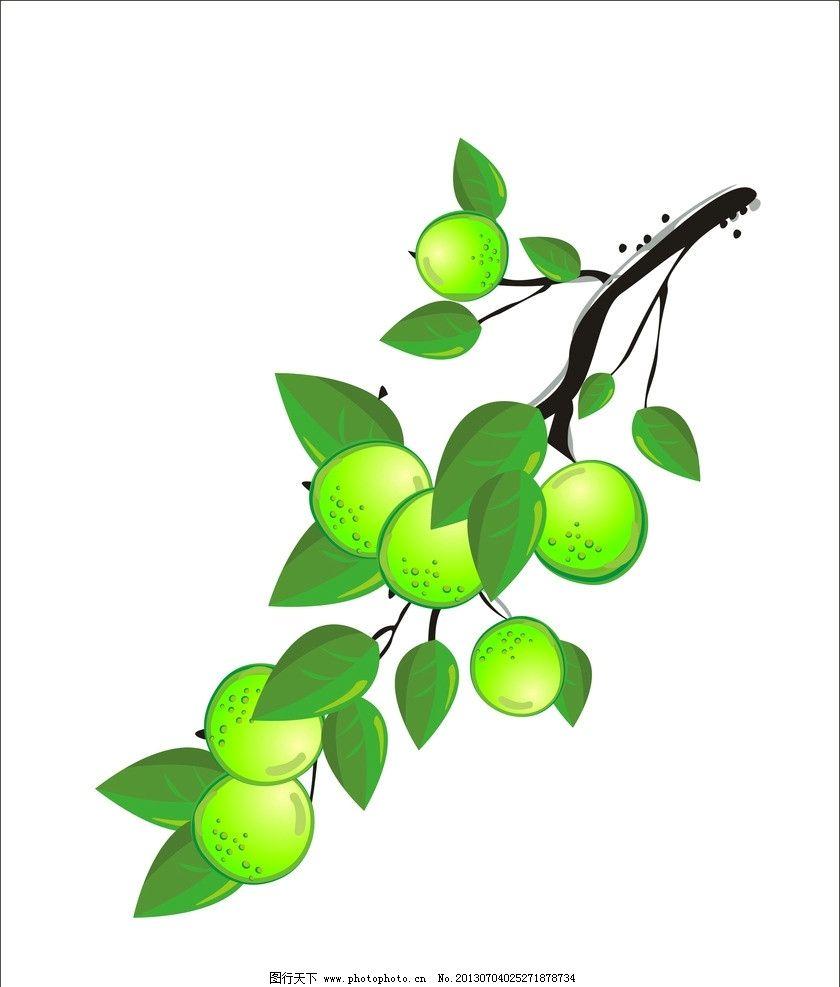 青梅 梅子 水果 树叶 梅子树 树木树叶 生物世界 矢量 cdr