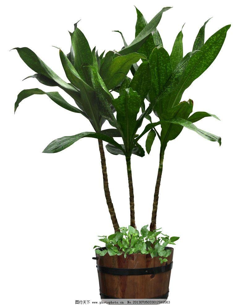 室内装饰植物图片
