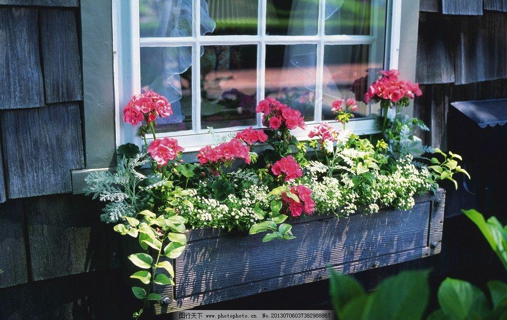 阳台花卉种植图片