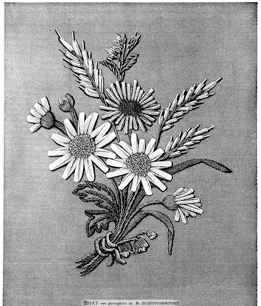 黑白花边植物纹样线条图片