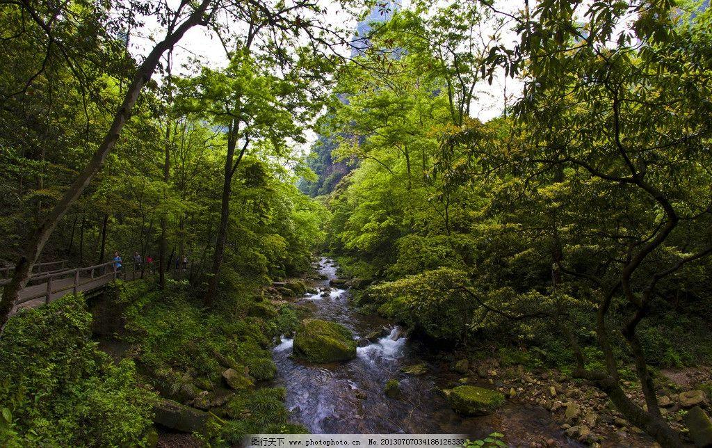 张家界风景 树林 风景 张家界 小溪 山涧 石头 溪水 自然风景 旅游