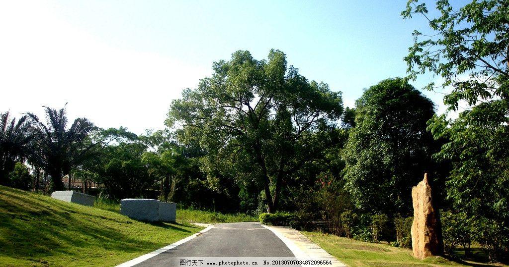南宁植物园 风景 森林 树木 马路树木 绿荫大道 公园 自然风景