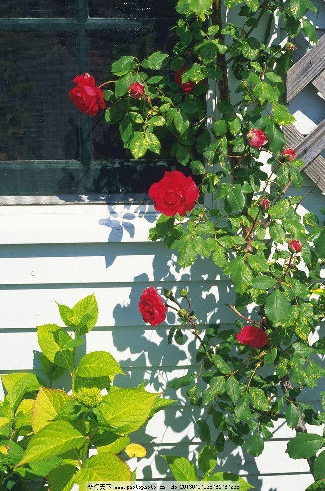 房屋 建筑 窗户 门窗 玻璃 阴影 影子 欧式 国外 庭院 花卉 花草 别墅