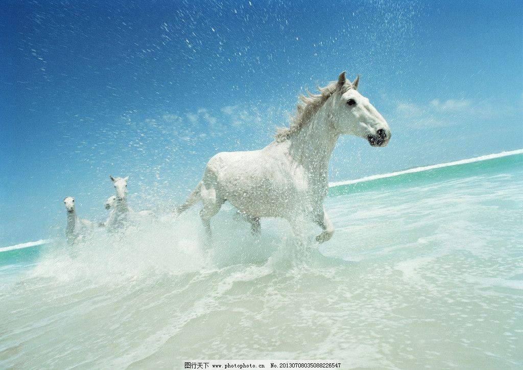 动物马 白色 奔跑 海水 沙滩 蓝天 摄影