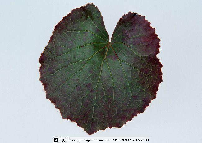 圆形的叶子图免费下载 绿叶 树叶 叶子 植物 自然 叶子 树叶 绿叶