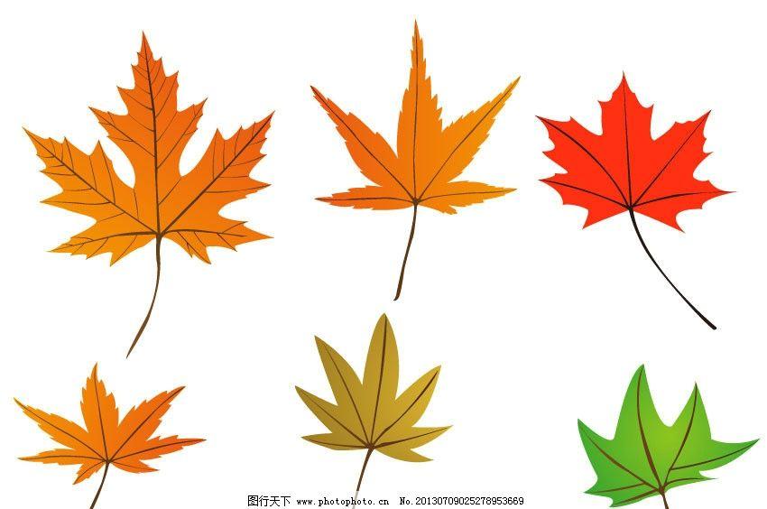 设计图库 生物世界 树木树叶    上传: 2013-7-9 大小: 1.