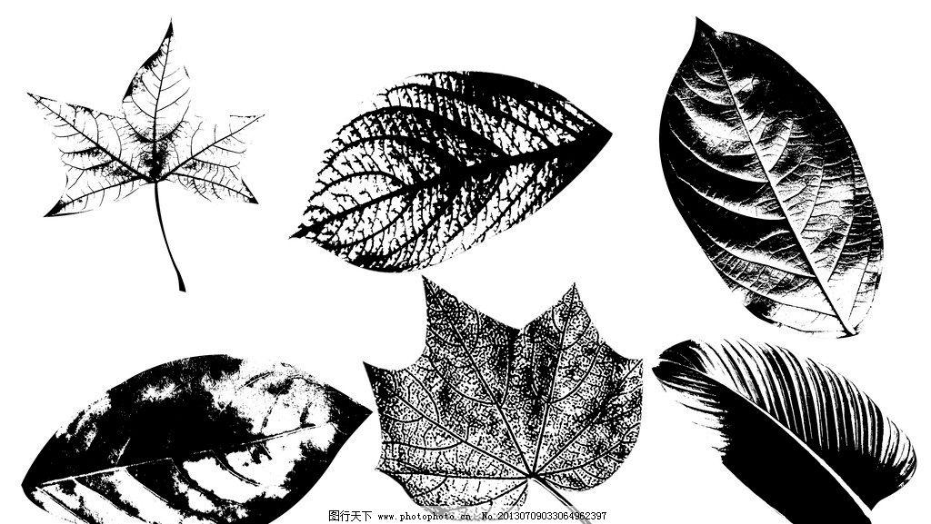 树叶 手绘树叶 黑白树叶 枫叶 叶子 树叶素材下载 树叶模板下载 分层