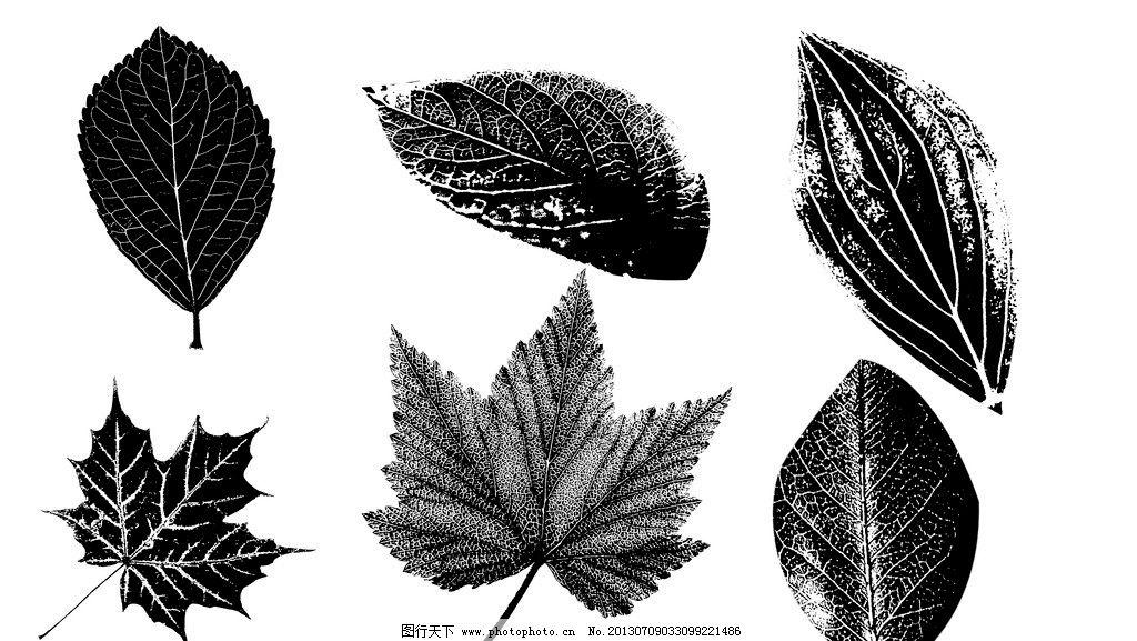 叶子 树叶 手绘树叶 黑白树叶 枫叶 树叶素材下载 树叶模板下载 分层