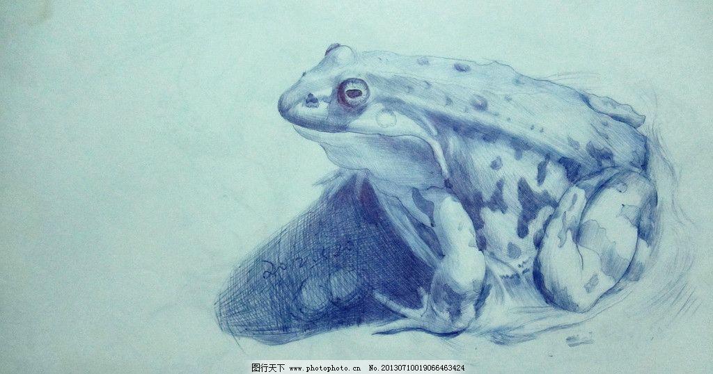 邬保康圆珠笔画 手绘 素描 动物 青蛙