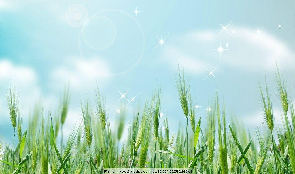 底图 背景 创意 数码 梦幻 唯美 绿色 麦田 花纹 花草 生物世界 设计