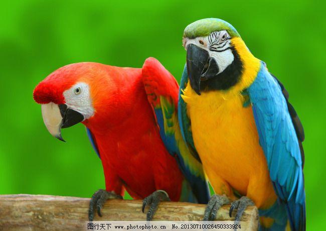 鹦鹉 鹦鹉免费下载 动物 红色 黄色 绿色 鸟 图片素材 风景生活旅游