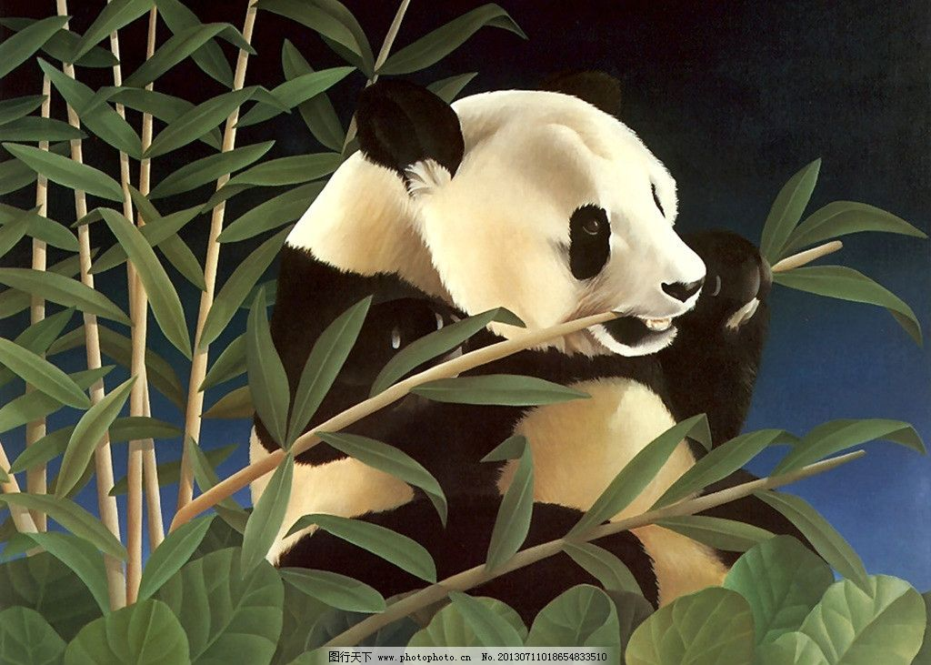 熊猫插画 熊猫 竹子 动物 绘画 艺术 其他 动漫动画 设计 100dpi jpg