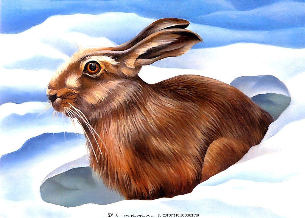 兔子 冬季 雪地 灰兔 动物 油画 绘画 艺术 其他 动漫动画 设计 100