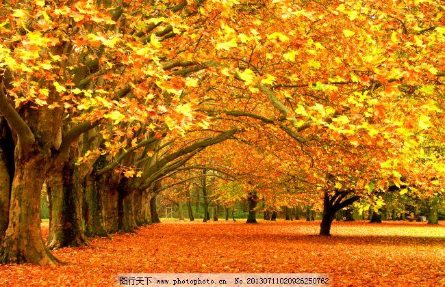 秋景素材 秋景素材免费下载 风景 高清 红色 秋天 收获 自然