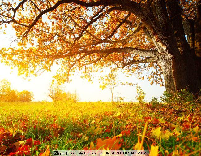 风景 高清 素材      风景 高清 草地 大树 素材      图片素材 背景