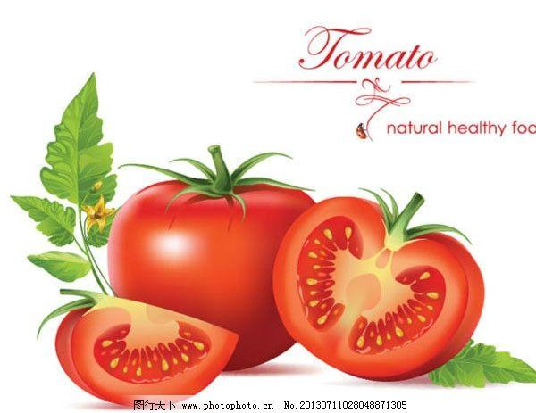 番茄 蔬菜 水果 矢量 手绘 蔬菜水果矢量素材 餐饮美食 生活百科 eps