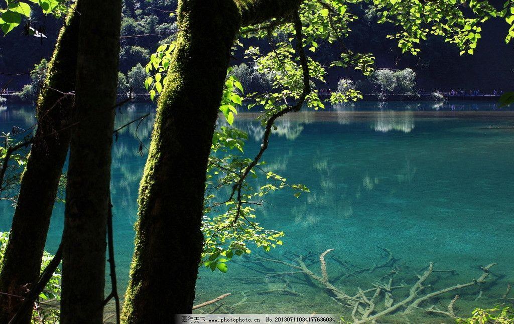 九寨沟风景 水面 清澈 透明 枯木 钙化 树木 森林 大山 阳光