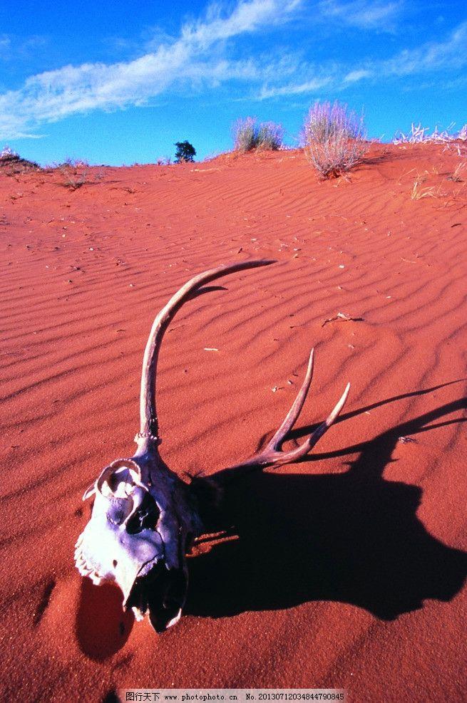 沙漠 动物骨头 骨架 骨骼 沙子 蓝天 荒漠 死神 死亡 死亡之海