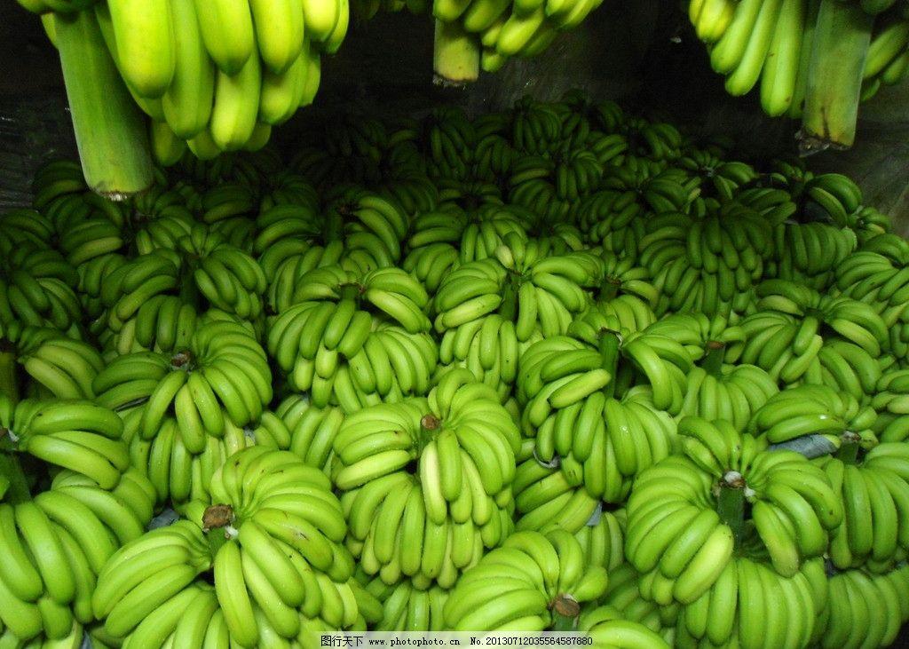 香蕉树叶简笔画