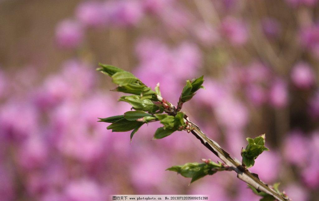 新芽 春芽 树发芽 春天 绿芽 树枝 树木树叶 生物世界 摄影 72dpi jpg