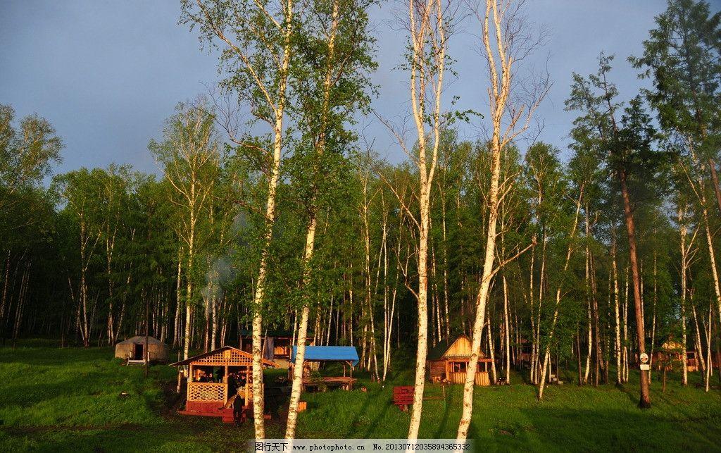 林中木屋 白桦树 白桦林 森林 俄罗斯 木屋 树木树叶 生物世界 摄影