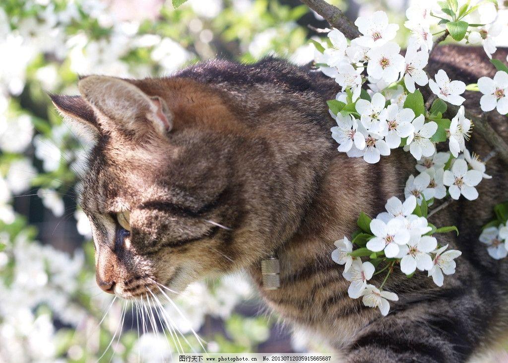 字花图片36种动物真图