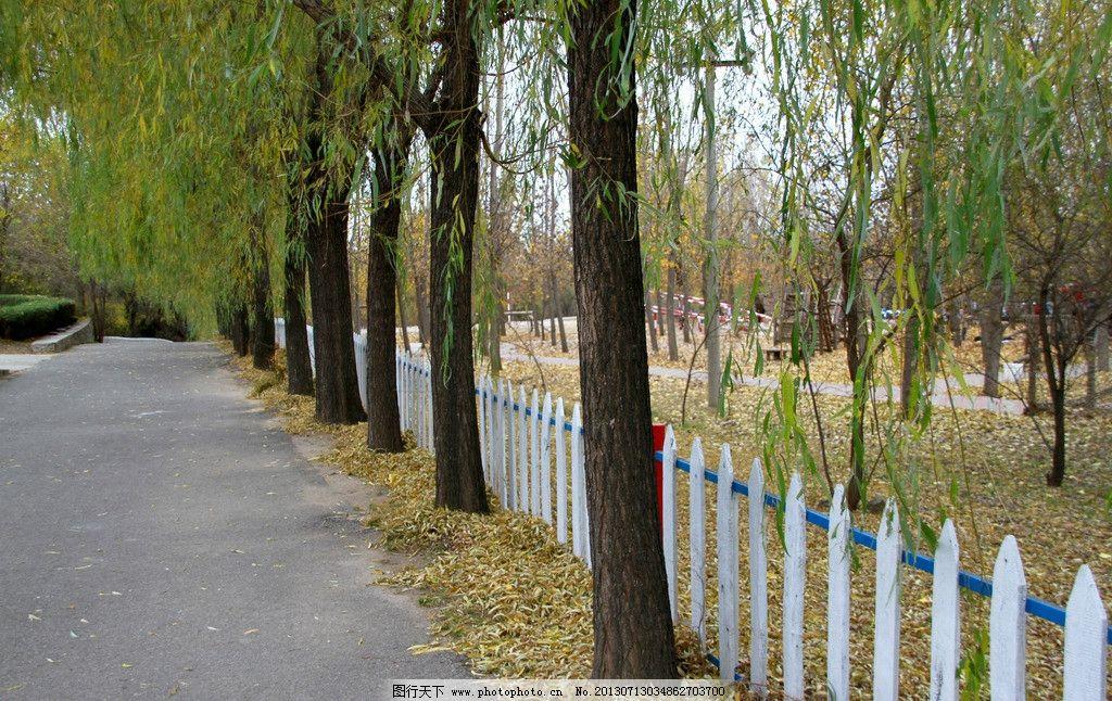 秋日风景 秋天 落叶 秋叶 黄叶 秋天风景 树林 树木 栅栏 公路 自然