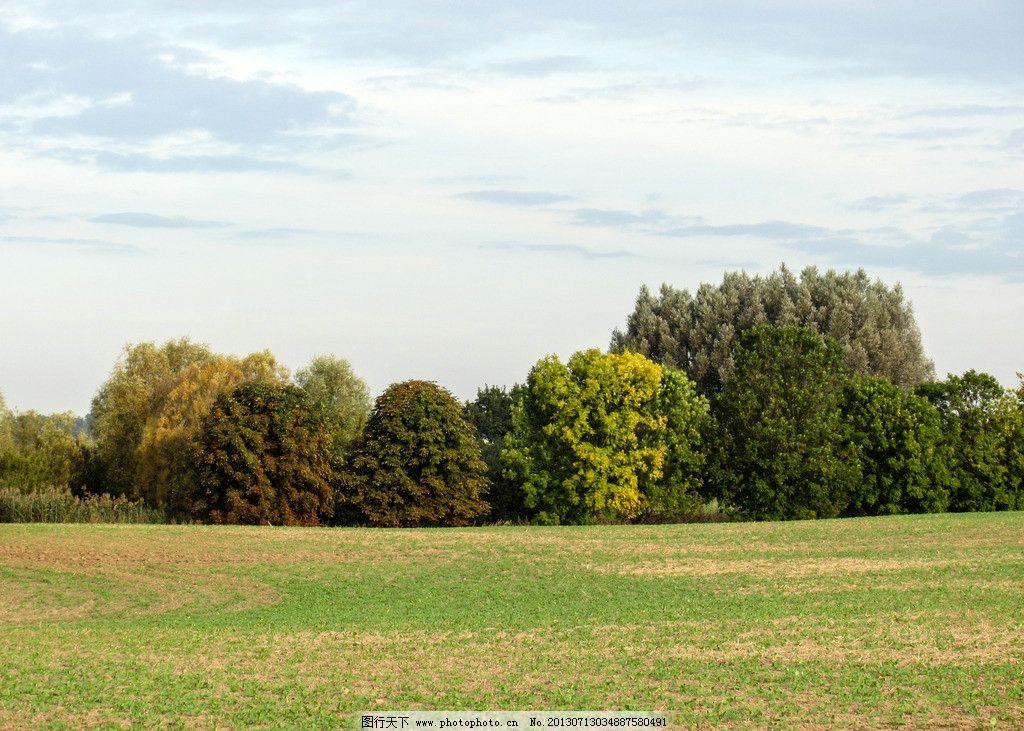 树林 蓝天 白云 树木 草地 黄昏 自然风景 自然景观 摄影
