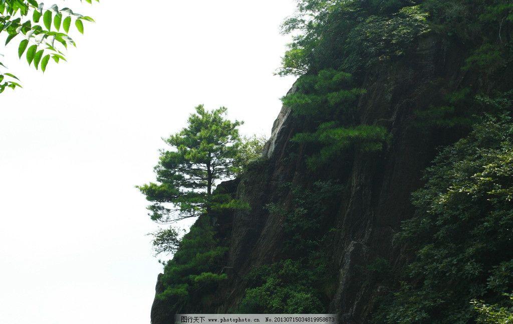 天台山风景 汉中风景 天台山 武乡天台山 天台山森林公园 松树 蓝天