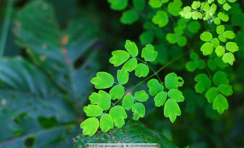 绿叶 天台山风景 绿色小叶子 山上的小树 绿色的小树 绿叶美景 花草