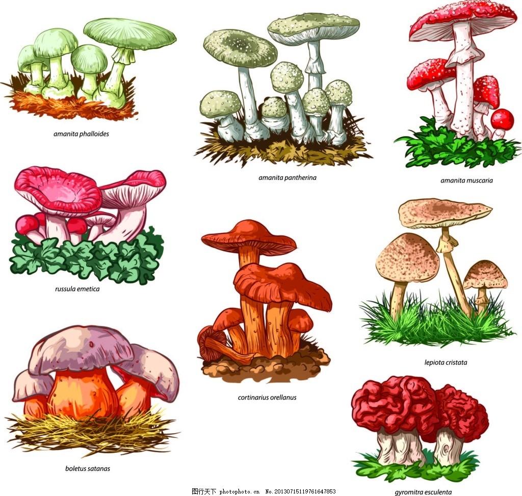 手绘野生菌 蘑菇 食物原料 白色