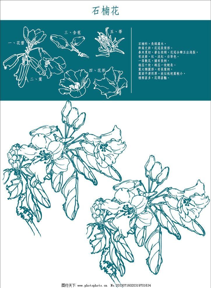 工笔画石楠花 木香 中国风 花卉 白描 线稿 木香藤 植物 矢量 爬藤 藤