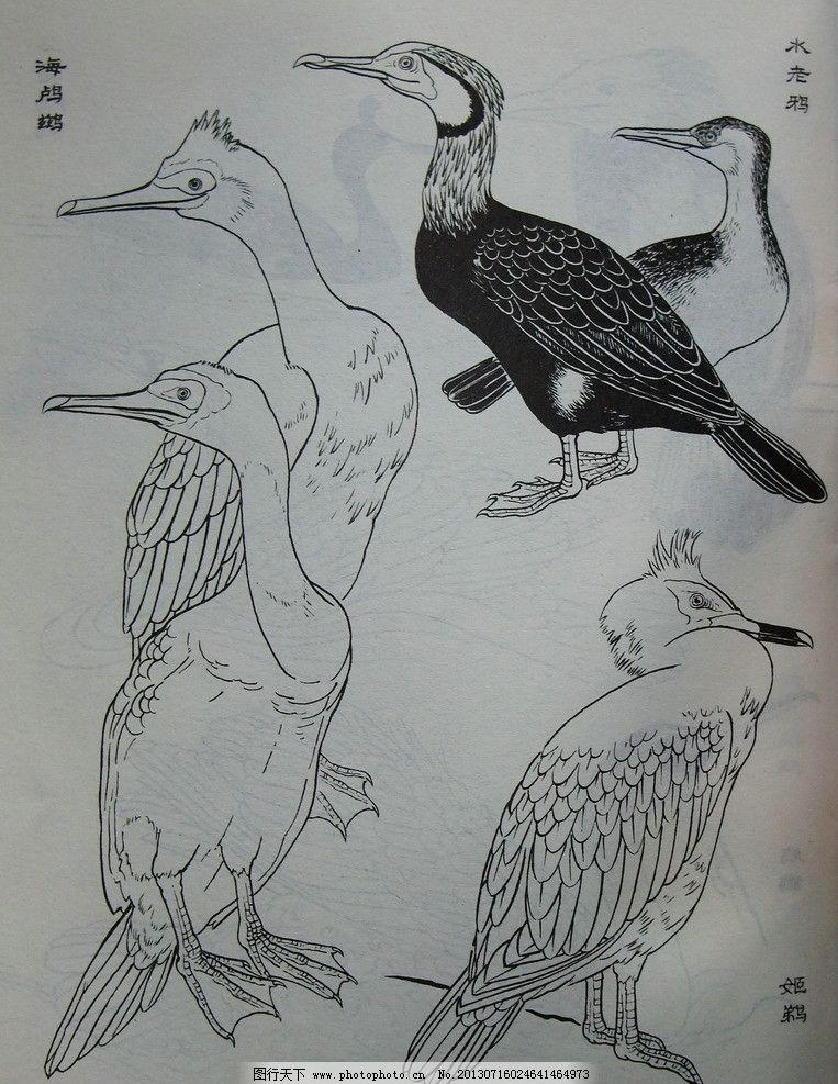 鸟类工笔画 小鸟 素材 写实 教程实例 黑白 工笔画 鸟类 生物世界