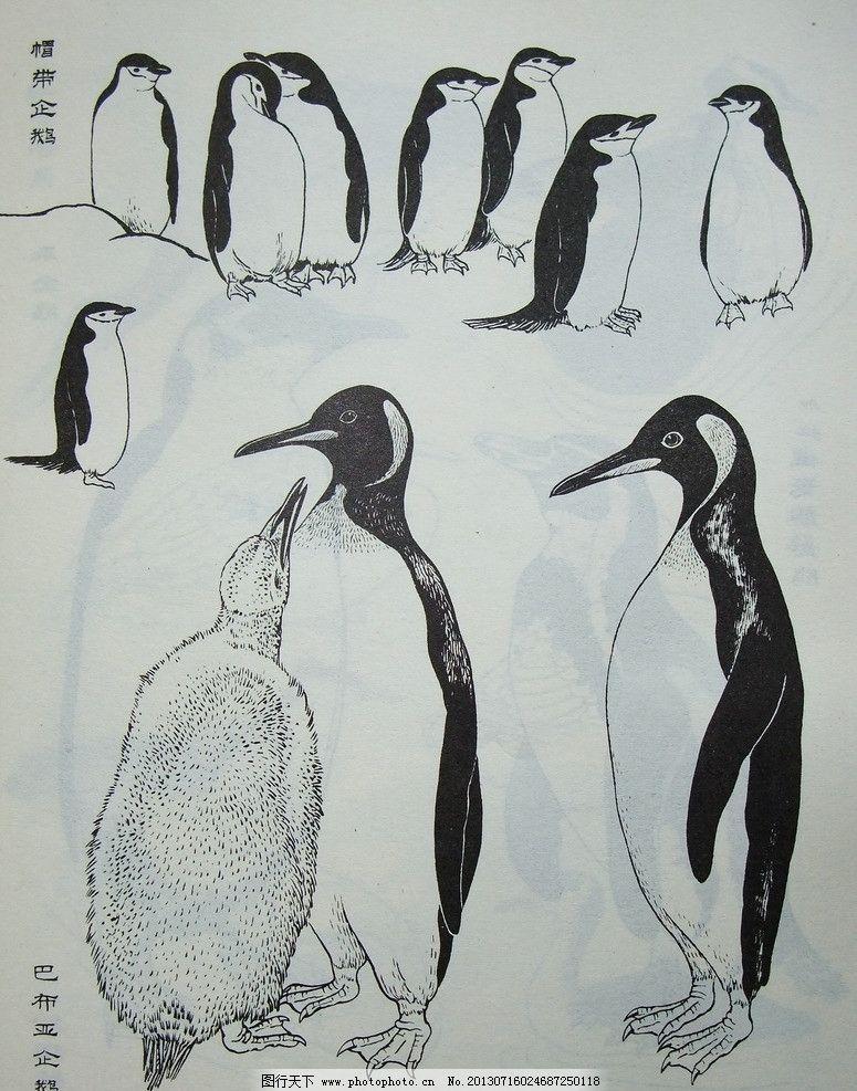 鸟类工笔画 小鸟 素材 写实 教程实例 黑白 工笔画 企鹅 鸟类 生物