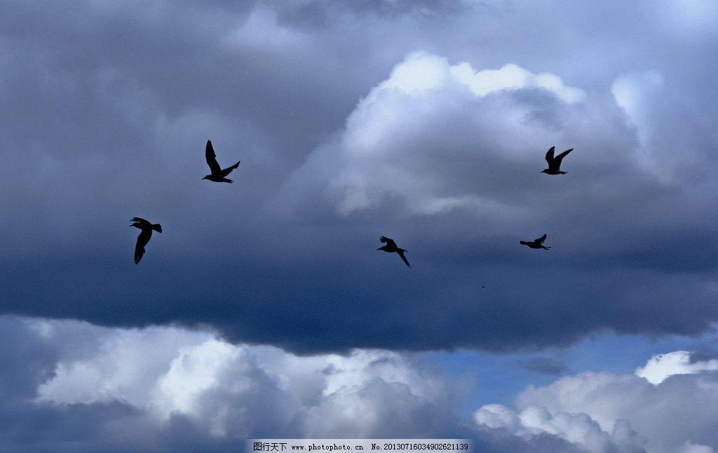 天空飞鸟图片