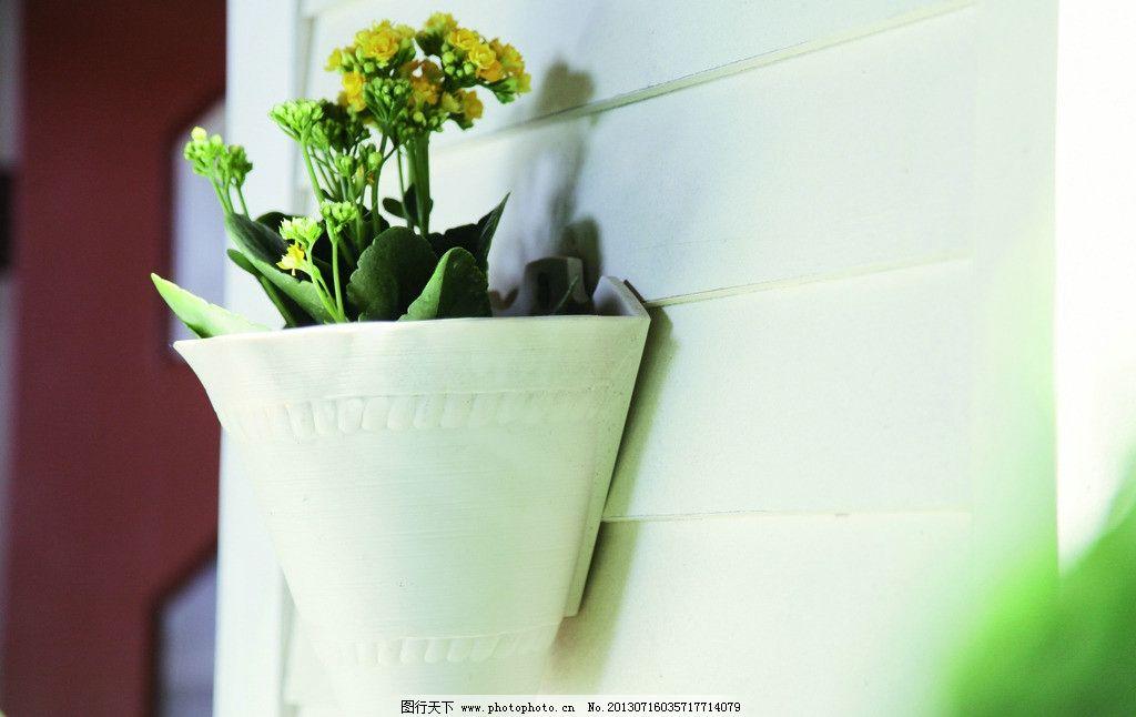 室内花图片