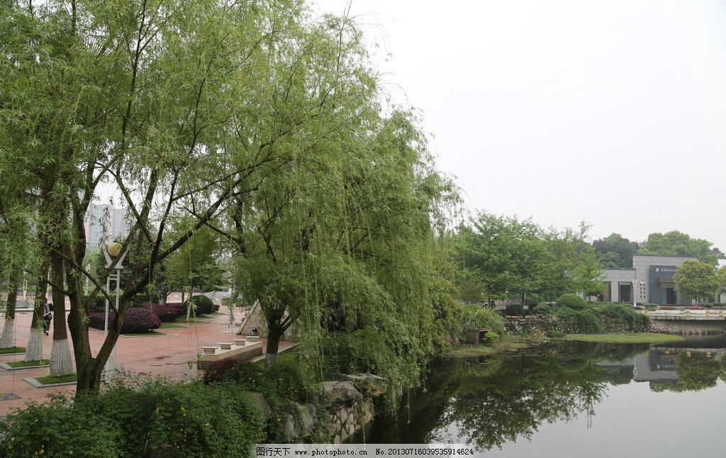 天鹅湖柳树 湖南 株洲 天鹅湖 公园 柳树 天鹅湖公园 园林建筑 建筑园