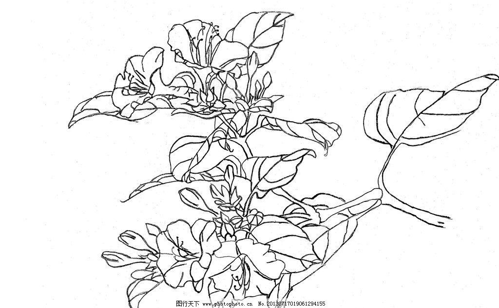 花卉白描 工笔画 线描 花朵 植物 黑白画