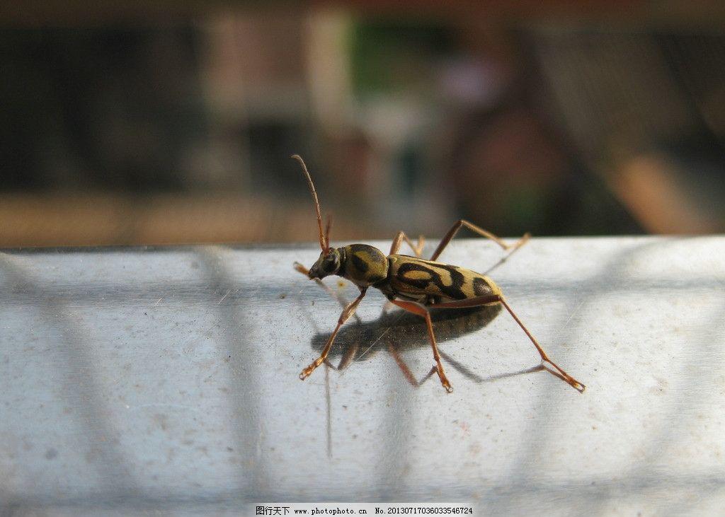 昆虫 动物 甲虫 硬壳 爬行 角 动植物 其他生物 生物世界 摄影 180dpi