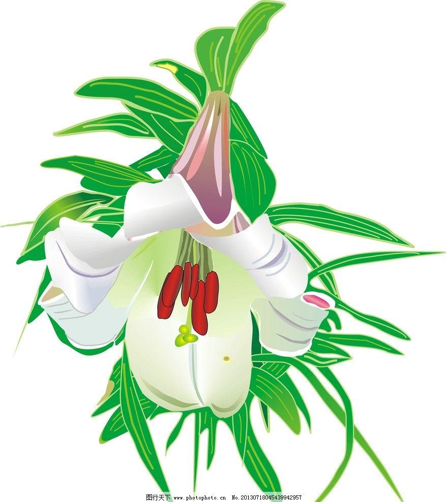 百合花 白色 绿色 花朵 绘画 红色 紫色 一朵花 花草 生物世界 矢量