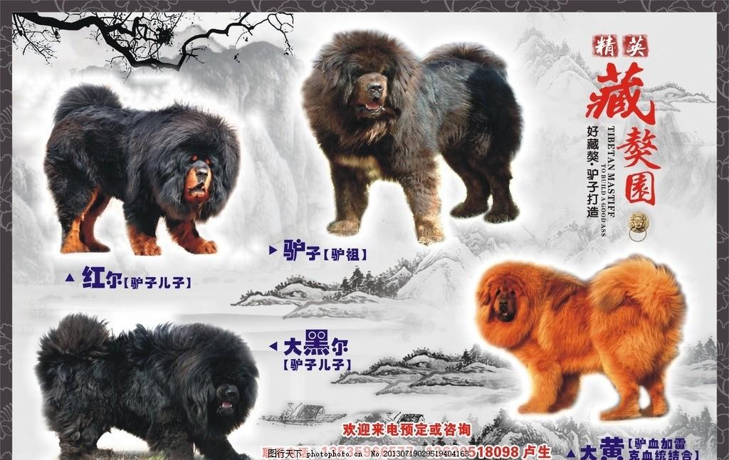藏獒园 藏獒喷画 藏獒传单 藏獒素材 大狗 西藏獒园 广告设计 矢量