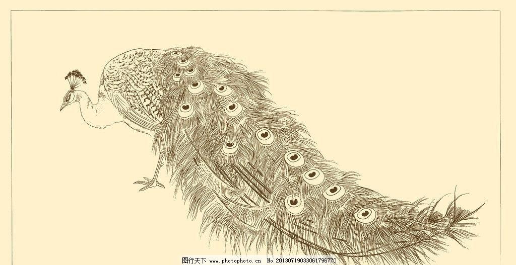白描孔雀 白描 线描 国画 中国画 孔雀 禽鸟 动物 psd分层素材 源文件