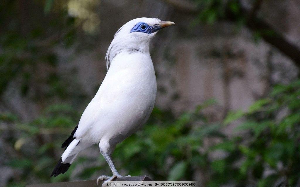 白色珍稀鸟类 停驻 珍稀动物 白色 鸟类 近景 抓拍 生物世界 摄影 96