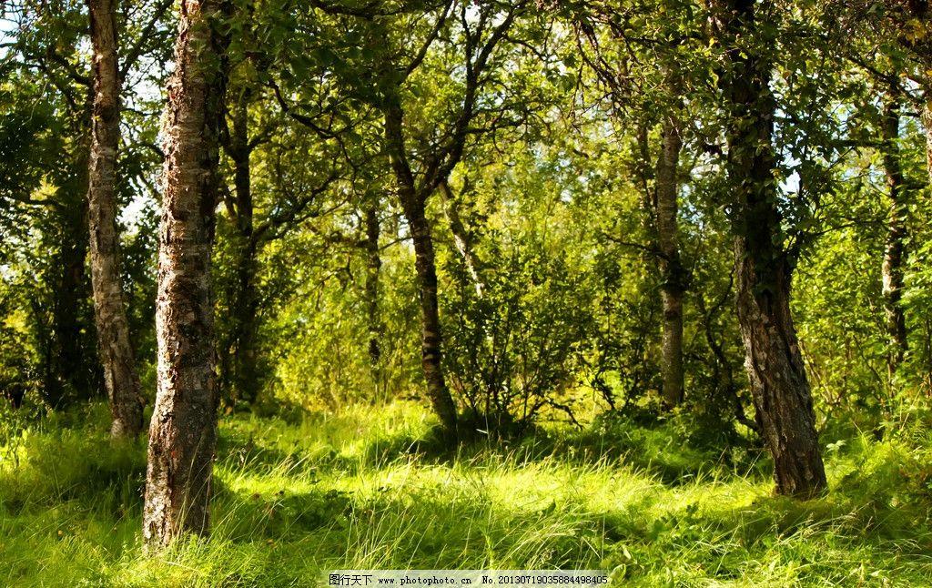 森林摄影 树 树木 林子 树林 森林图片 森林素材 树木树叶 生物世界